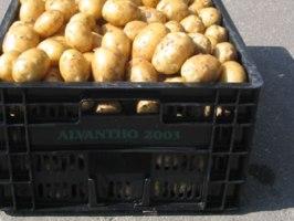 kist_aardappelen_200